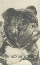 dog100285 - Dog Postcard Post Card