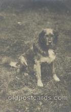 dog100287 - Dog Postcard Post Card