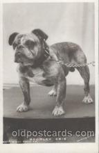 dog100323 - Dog Postcard Post Card