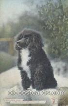 dog100339 - Dog Postcard Post Card