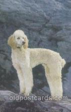 dog100340