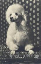 dog100345 - Dog Postcard Post Card