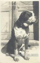 dog100346 - Dog Postcard Post Card