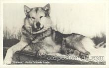 dog100371 - Alaska Malamute Leader, Dog, Dogs Postcard Post Card