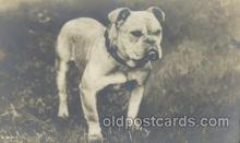 dog100398 - Bull Dog, Dogs Postcard Post Card