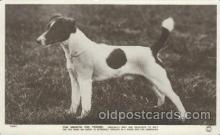 dog100447 - Smooth Fox Terrier, Dog, Dogs Postcard Post Card