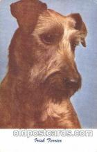 dog100461 - Irish Terrier Dog, Dogs Postcard Post Card