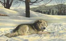 dog100470 - Eskimo Sled Dog Dog, Dogs Postcard Post Card