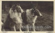 dog100567 - Collie Postcard, Dog Post Card, Old Vintage Antique