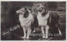 dog100572 - Collie Postcard, Dog Post Card, Old Vintage Antique