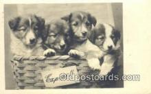 dog100573 - Collie Postcard, Dog Post Card, Old Vintage Antique