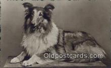 dog100576 - Collie Postcard, Dog Post Card, Old Vintage Antique