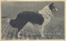 dog100577 - Collie Postcard, Dog Post Card, Old Vintage Antique