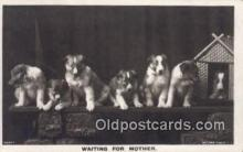 dog100579 - Collie Postcard, Dog Post Card, Old Vintage Antique