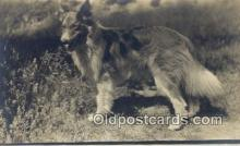 dog100588 - Collie Postcard, Dog Post Card, Old Vintage Antique