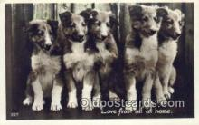 dog100591 - Collie Postcard, Dog Post Card, Old Vintage Antique