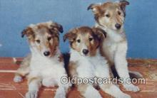 dog100594 - Collie Postcard, Dog Post Card, Old Vintage Antique