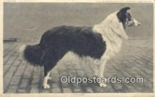 dog100598 - Collie Postcard, Dog Post Card, Old Vintage Antique