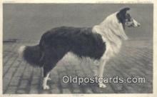 dog100599 - Collie Postcard, Dog Post Card, Old Vintage Antique