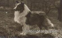 dog100603 - Collie Postcard, Dog Post Card, Old Vintage Antique