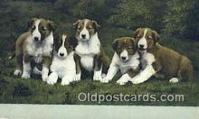 dog100606 - Collie Postcard, Dog Post Card, Old Vintage Antique