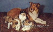dog100612 - Collie Postcard, Dog Post Card, Old Vintage Antique