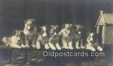 dog100614 - Collie Postcard, Dog Post Card, Old Vintage Antique