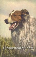 dog100617 - Collie Postcard, Dog Post Card, Old Vintage Antique