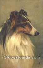 dog100618 - Collie Postcard, Dog Post Card, Old Vintage Antique