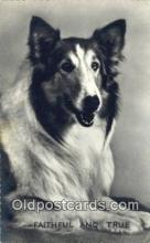 dog100621 - Collie Postcard, Dog Post Card, Old Vintage Antique