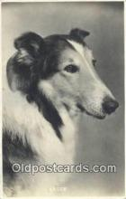 dog100624 - Collie Postcard, Dog Post Card, Old Vintage Antique