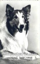 dog100627 - Collie Postcard, Dog Post Card, Old Vintage Antique