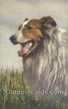dog100628 - Collie Postcard, Dog Post Card, Old Vintage Antique