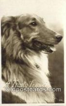 dog100629 - Collie Postcard, Dog Post Card, Old Vintage Antique