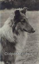 dog100631 - Collie Postcard, Dog Post Card, Old Vintage Antique