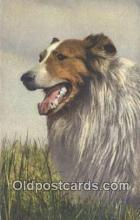 dog100636 - Collie Postcard, Dog Post Card, Old Vintage Antique
