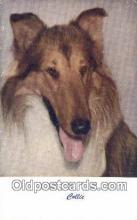 dog100637 - Collie Postcard, Dog Post Card, Old Vintage Antique