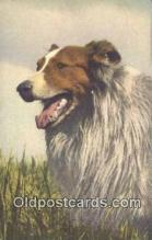 dog100638 - Collie Postcard, Dog Post Card, Old Vintage Antique