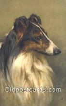 dog100642 - Collie Postcard, Dog Post Card, Old Vintage Antique
