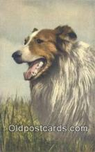 dog100646 - Collie Postcard, Dog Post Card, Old Vintage Antique