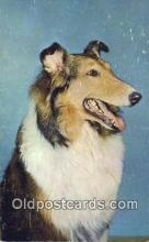 dog100648 - Collie Postcard, Dog Post Card, Old Vintage Antique