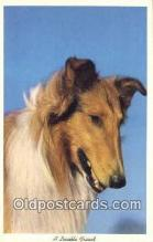 dog100649 - Collie Postcard, Dog Post Card, Old Vintage Antique