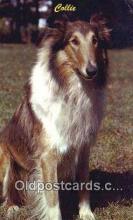dog100651 - Collie Postcard, Dog Post Card, Old Vintage Antique