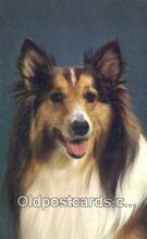 dog100655 - Collie Postcard, Dog Post Card, Old Vintage Antique