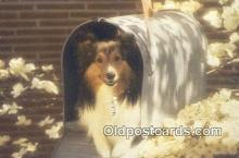 dog100658 - Collie Postcard, Dog Post Card, Old Vintage Antique