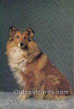dog100660 - Collie Postcard, Dog Post Card, Old Vintage Antique