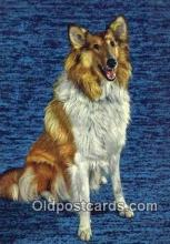 dog100664 - Collie Postcard, Dog Post Card, Old Vintage Antique