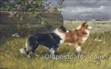 dog100668 - Collie Dog Post Card Postcard Old Vintage Antique
