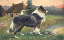 dog100671 - Collie Dog Post Card Postcard Old Vintage Antique