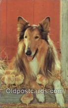 dog100673 - Collie Dog Post Card Postcard Old Vintage Antique